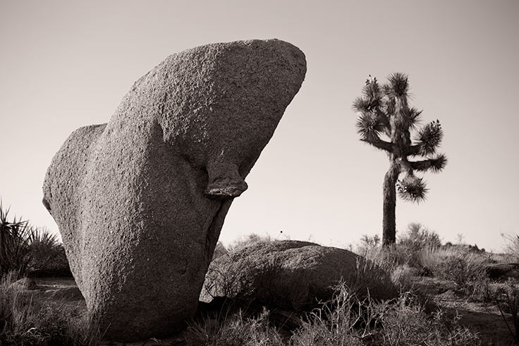 nude photography workshop in Joshua Tree led by photographer Allen Birnbach